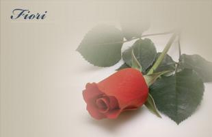 Fiori rossi e mazzi di fiori