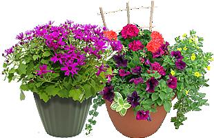 piante e fiori freschi