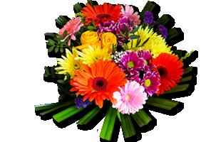 fiori-mimosa-nuovo